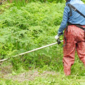 横須賀市で草刈りにかかる料金相場は?追加料金や業者選びのコツまで解説